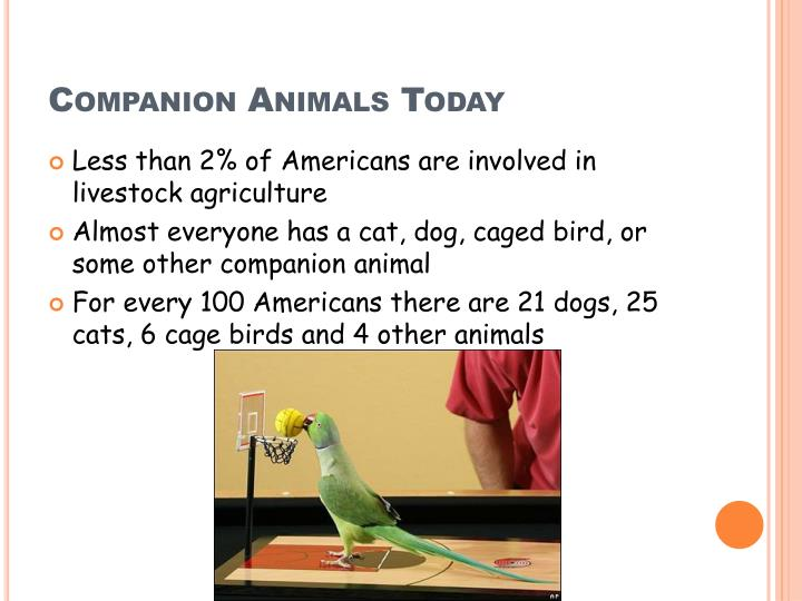 Companion Animals Today