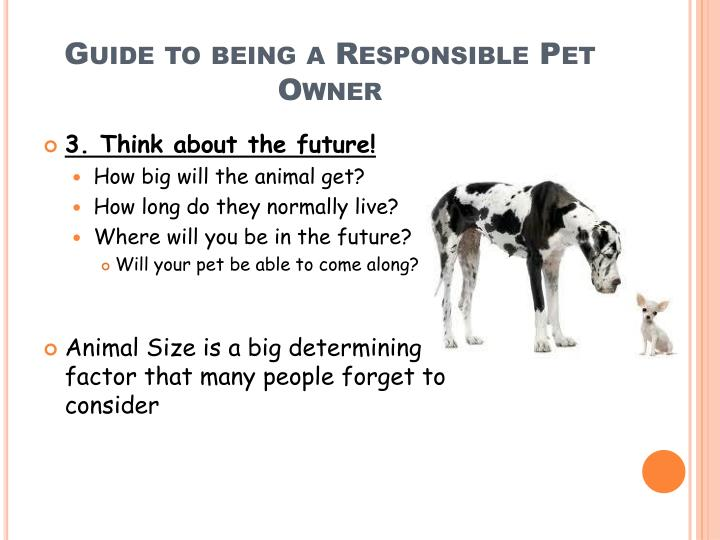 Guide to being a Responsible Pet Owner
