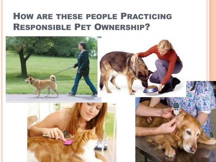 How are these people Practicing Responsible Pet Ownership?