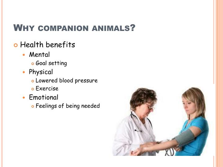 Why companion animals?