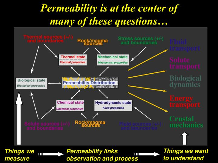 Permeability is at the center of