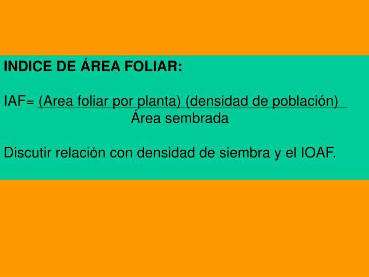 INDICE DE ÁREA FOLIAR:
