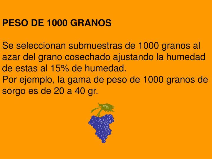 PESO DE 1000 GRANOS
