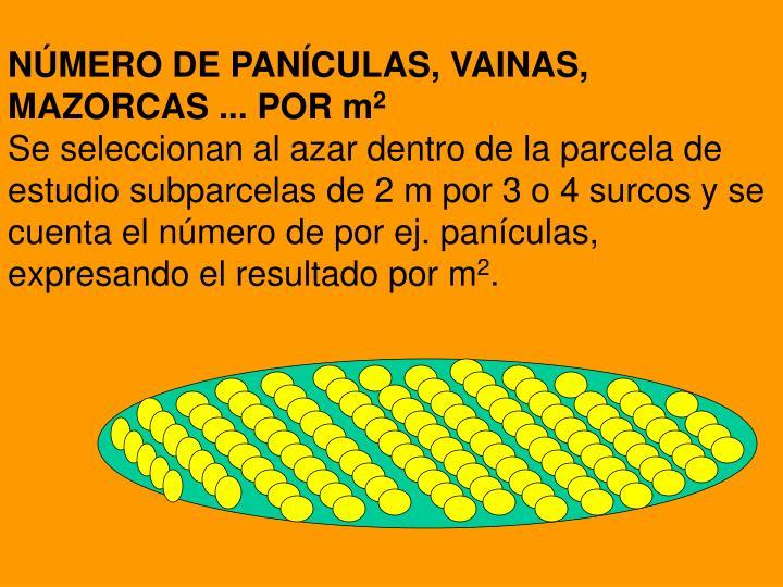 NÚMERO DE PANÍCULAS, VAINAS, MAZORCAS ... POR m