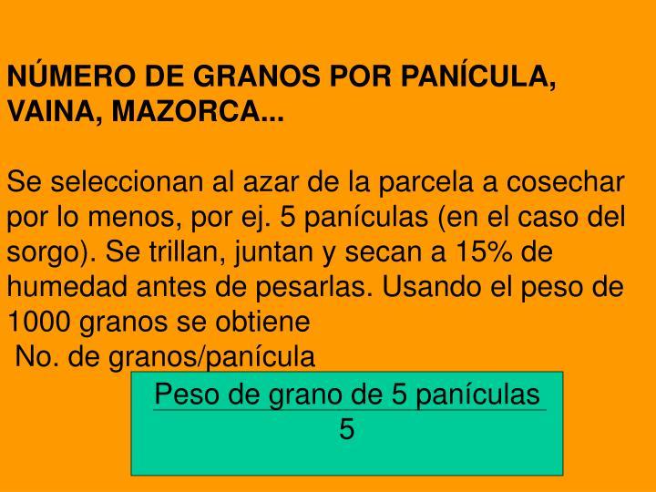 NÚMERO DE GRANOS POR PANÍCULA, VAINA, MAZORCA...