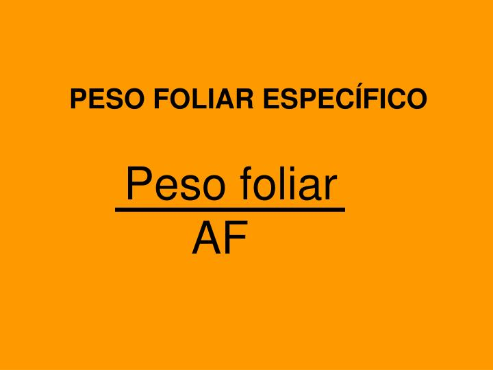 PESO FOLIAR ESPECÍFICO