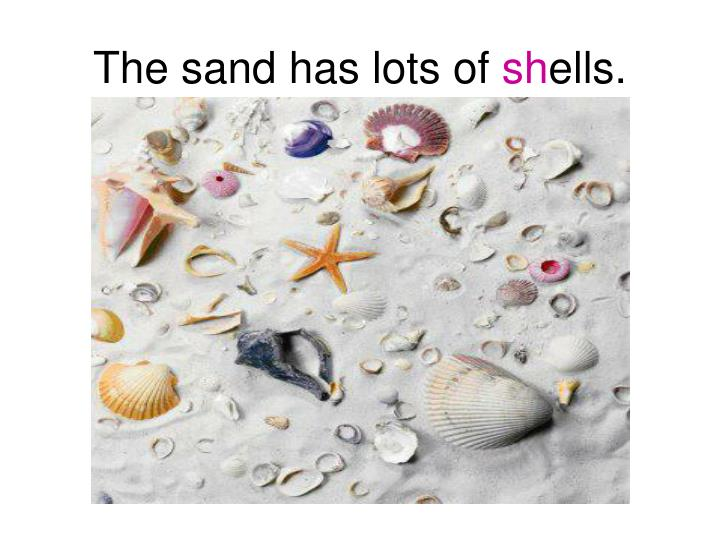 The sand has lots of sh ells