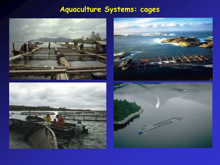 Aquaculture Systems: cages