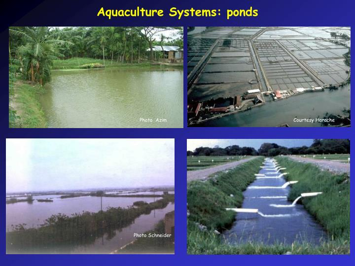 Aquaculture Systems: ponds