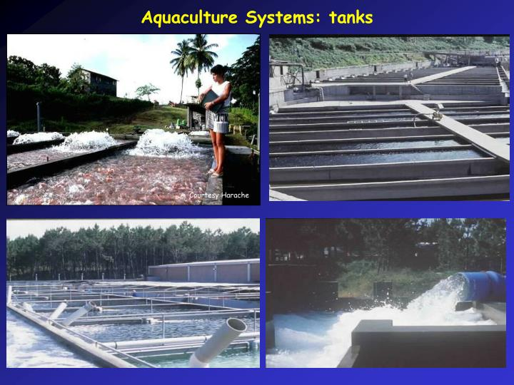 Aquaculture Systems: tanks