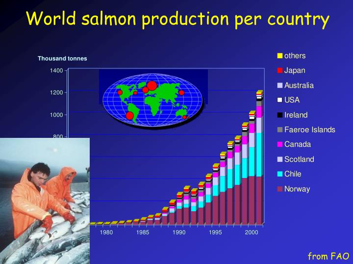 World salmon production per country