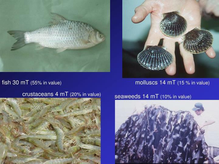 fish 30 mT