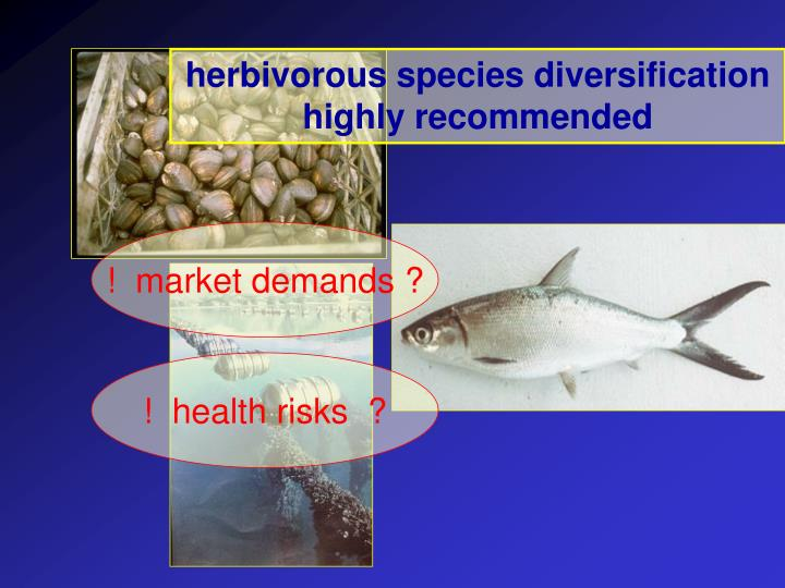 herbivorous species diversification