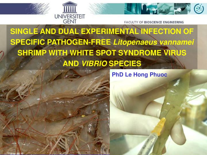 SINGLE AND DUAL EXPERIMENTAL INFECTION OF SPECIFIC PATHOGEN-FREE