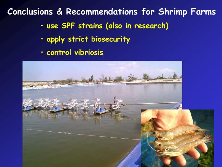 Conclusions & Recommendations for Shrimp Farms