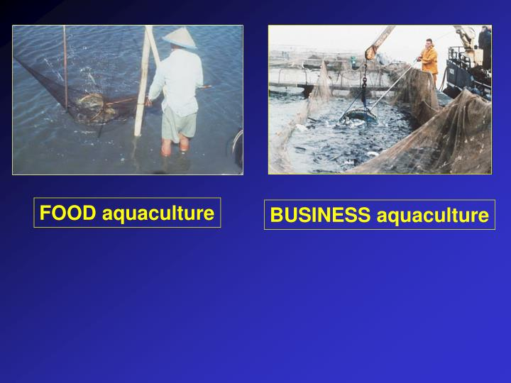 BUSINESS aquaculture