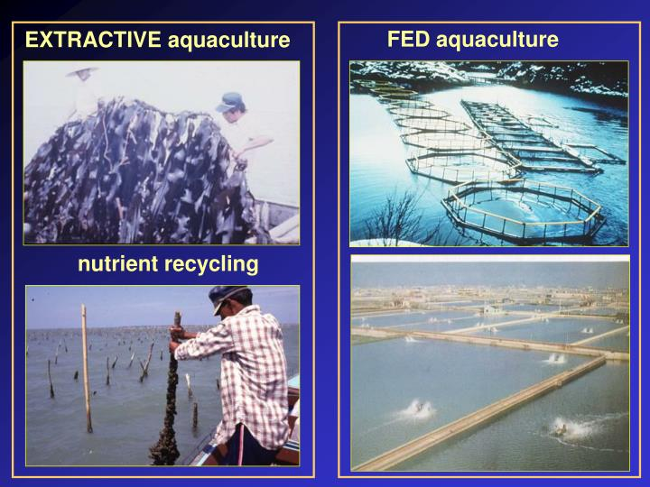 FED aquaculture