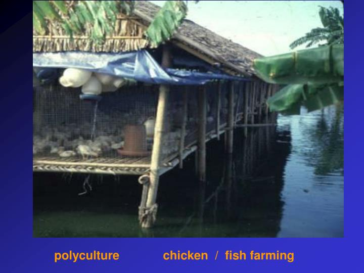 polyculture             chicken  /  fish farming