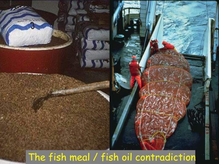 The fish meal / fish oil contradiction