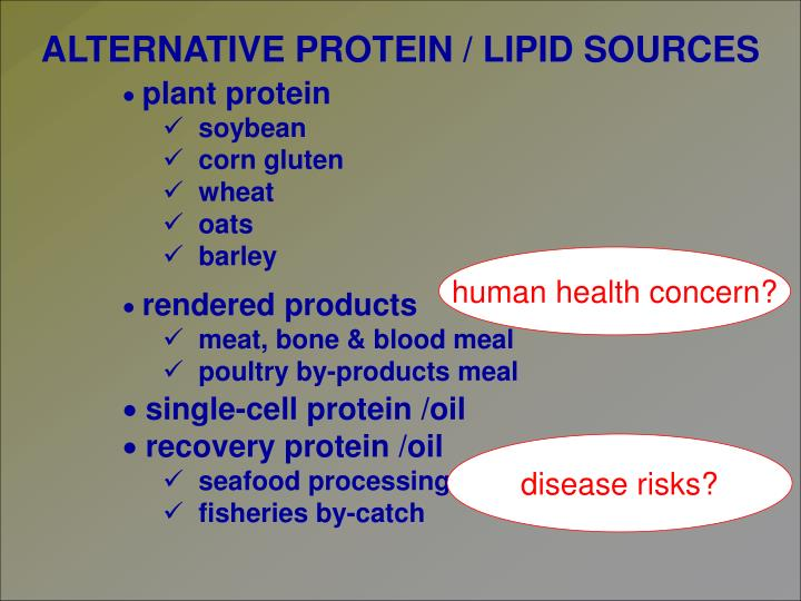 ALTERNATIVE PROTEIN / LIPID SOURCES
