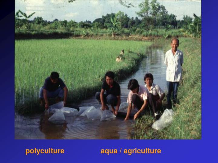polyculture                  aqua / agriculture