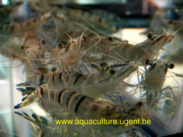 www.aquaculture.ugent.be