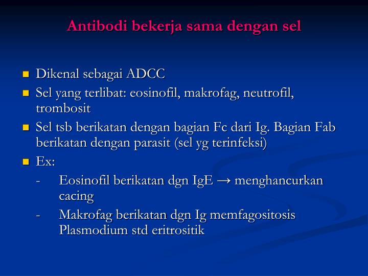 Antibodi bekerja sama dengan sel