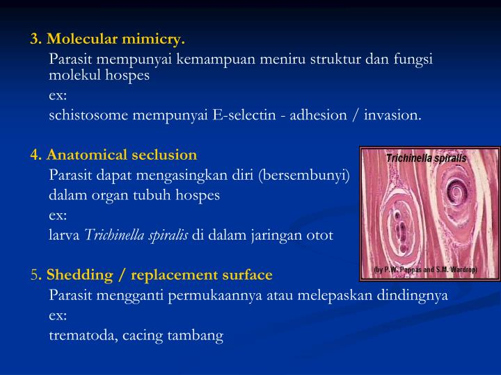 3. Molecular mimicry.