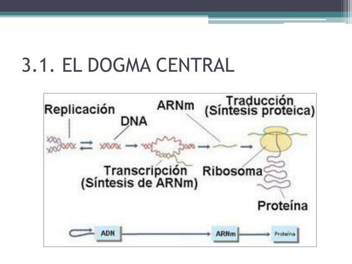 3.1. EL DOGMA CENTRAL