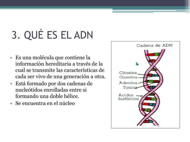 3. QUÉ ES EL ADN