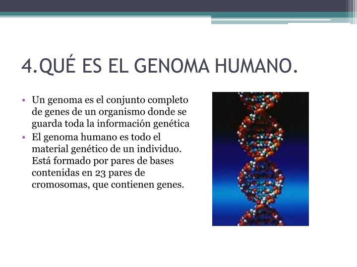 4.QUÉ ES EL GENOMA HUMANO.