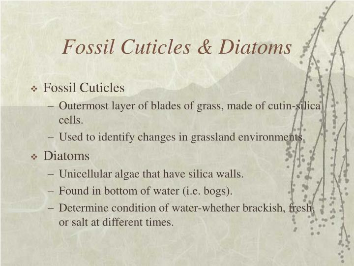 Fossil Cuticles & Diatoms