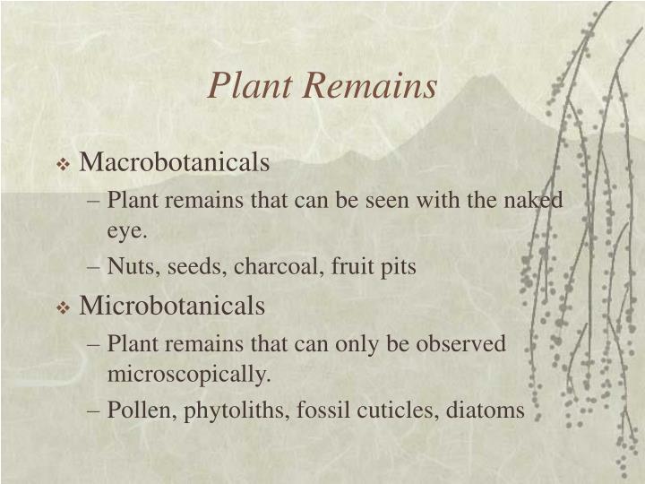 Plant Remains
