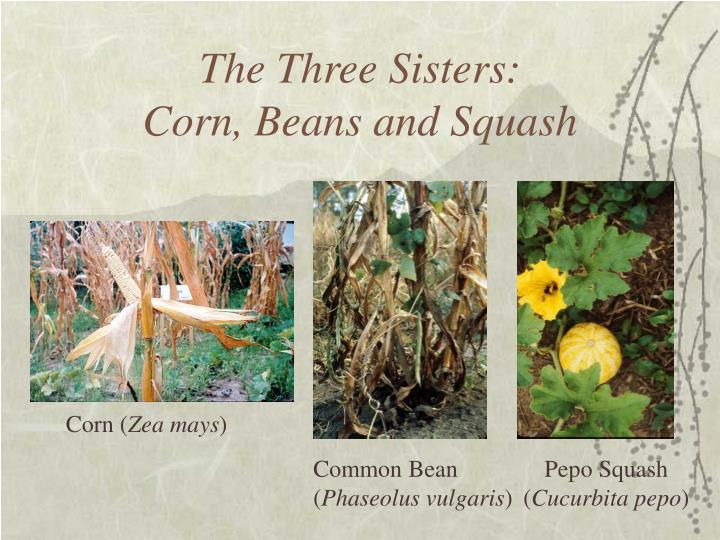 The Three Sisters: