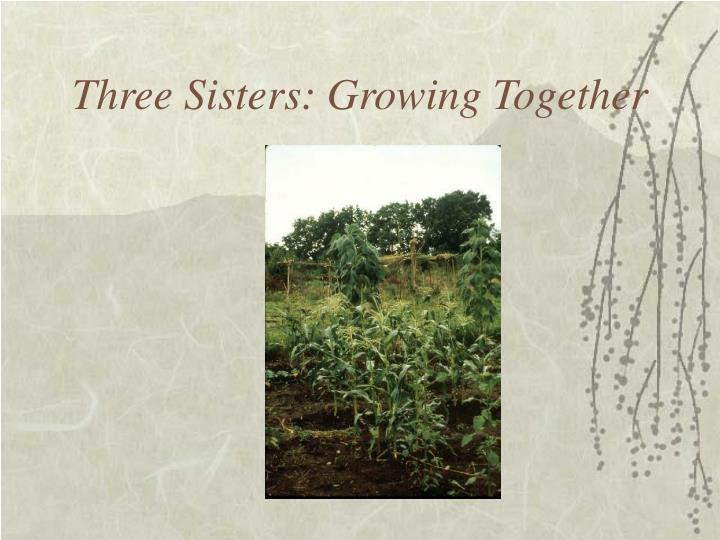 Three Sisters: Growing Together