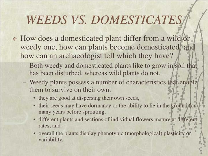 WEEDS VS. DOMESTICATES