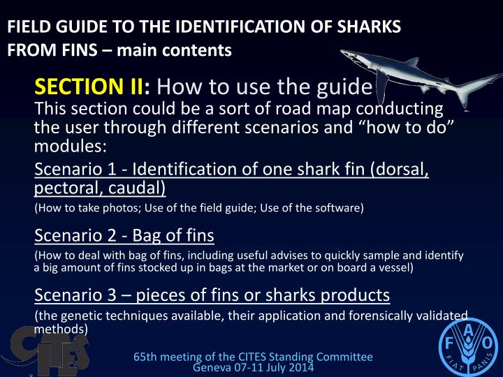 FIELD GUIDE TO THE IDENTIFICATION OF SHARKS FROM FINS – main contents