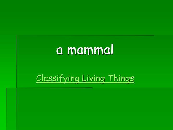 a mammal