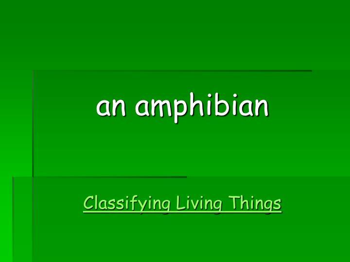 an amphibian
