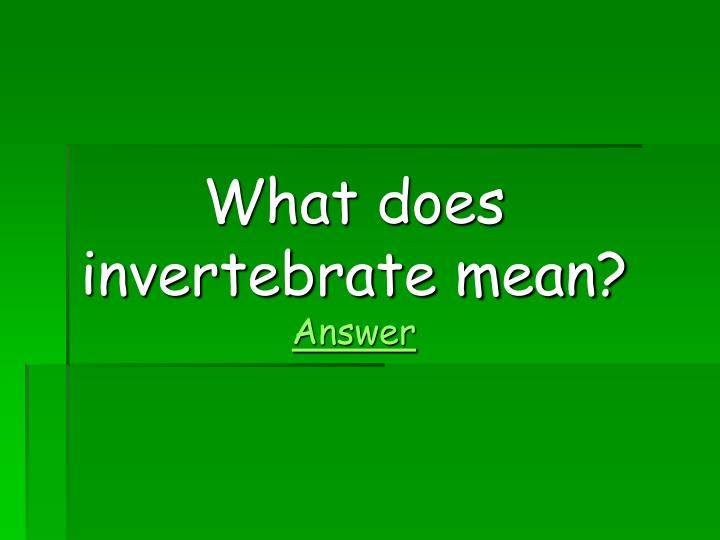 What does invertebrate mean?