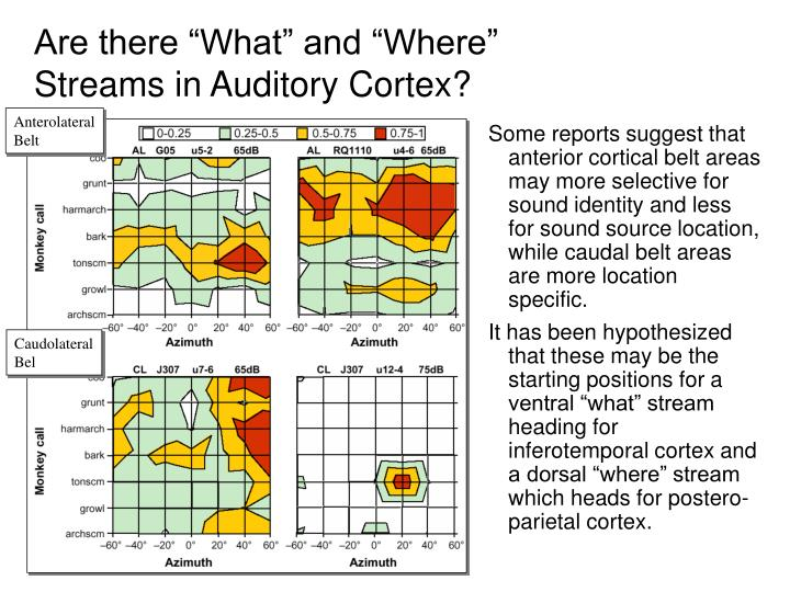 "Are there ""What"" and ""Where"" Streams in Auditory Cortex?"