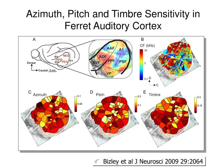 Azimuth, Pitch and Timbre Sensitivity in Ferret Auditory Cortex