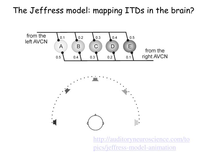 The Jeffress model: mapping ITDs in the brain?