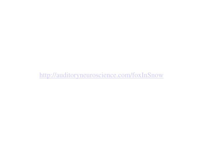 http://auditoryneuroscience.com/foxInSnow