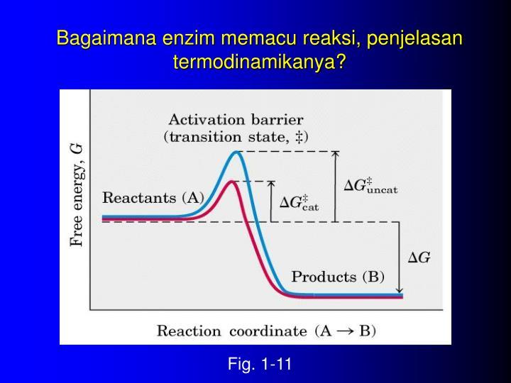 Bagaimana enzim memacu reaksi, penjelasan termodinamikanya?