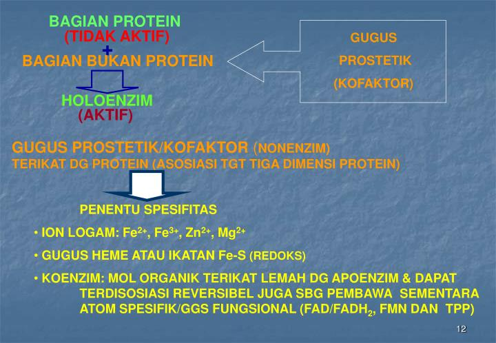 BAGIAN PROTEIN