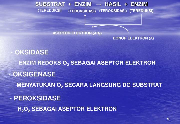 SUBSTRAT  +  ENZIM   →  HASIL  +  ENZIM