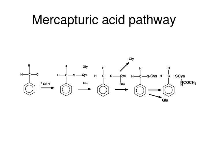 Mercapturic acid pathway