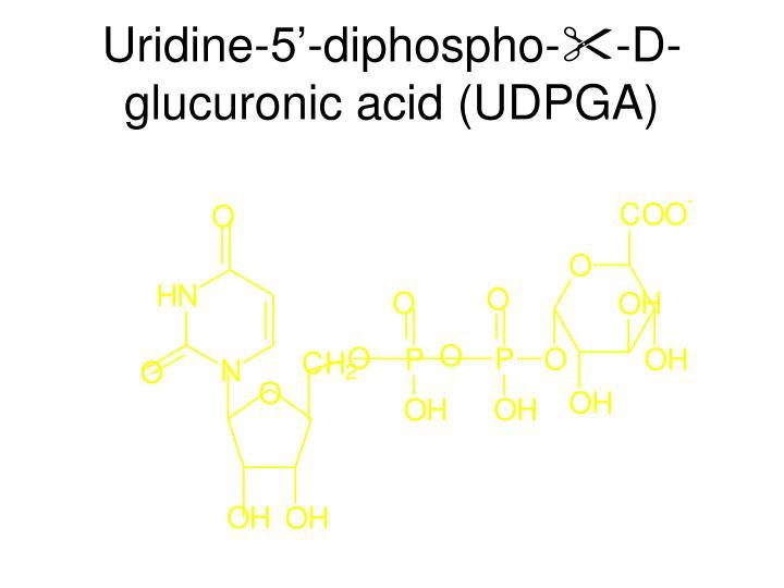 Uridine-5'-diphospho-