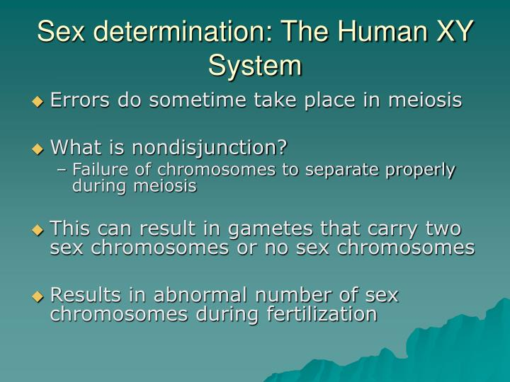 Sex determination: The Human XY System